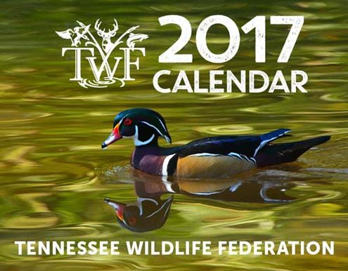 wildlife calendar contest tennessee 2017